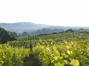 Spa, Dahlonega Resort and Vineyard